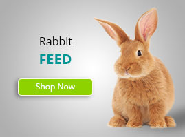 rabbit_small_banner